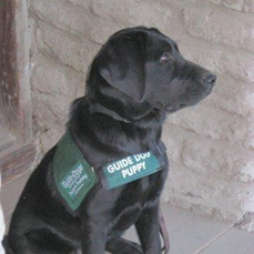 San Ramon Valley Guide Dogs